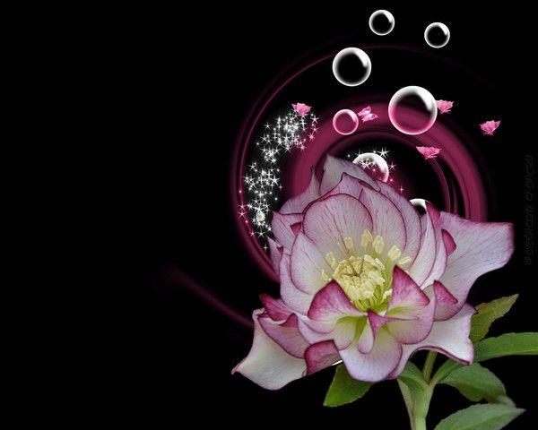 Fonds ecrans fleurs for Fond ecran ete fleurs