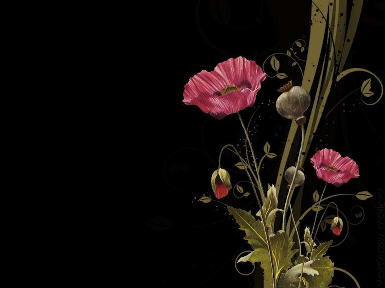 Fonds ecrans fleurs for Ecran de fond